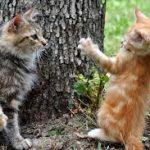 Sverminazione dei gatti