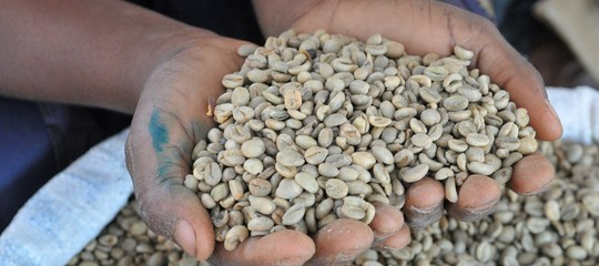 Ethiopia: Italy supports the coffee sector