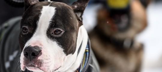 Un cane è stato accoltellato e impiccato a Castellammare di Stabia