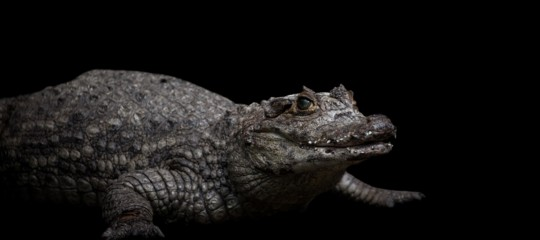 ritrovato caimano sardegna orosei