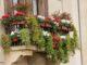 Come abbellire il tuo balcone con le piante?